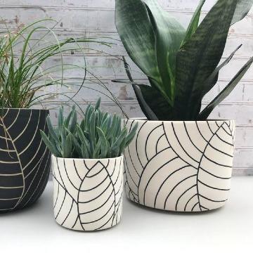 modelos de plantas para interior de casa