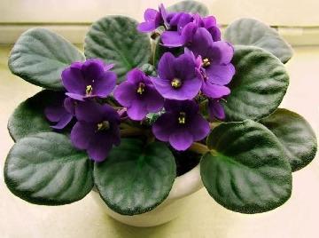 pequeñas plantas de interior con flor