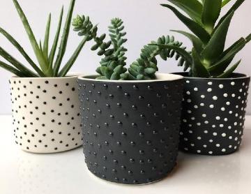 pequeñas plantas para interior de casa