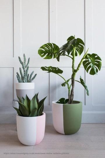 tipos de plantas para interior de casa