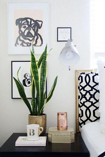 plantas para decoracion de interiores clasicas