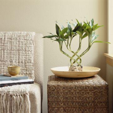 plantas para decoracion de interiores ornamentos