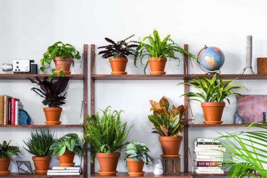 plantas para decoracion de interiores pequeñas