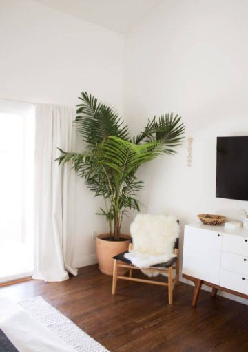 decorar la sala con plantas en esquinas