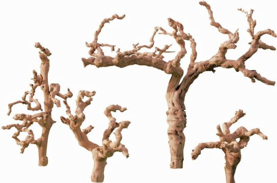 troncos secos para decoracion de diferentes tamaños