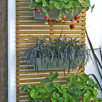 plantas para patios pequeños especies