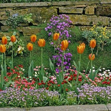 plantas para patios pequeños flores