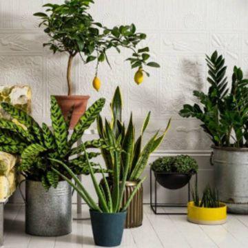 plantas de sombra con flores especies
