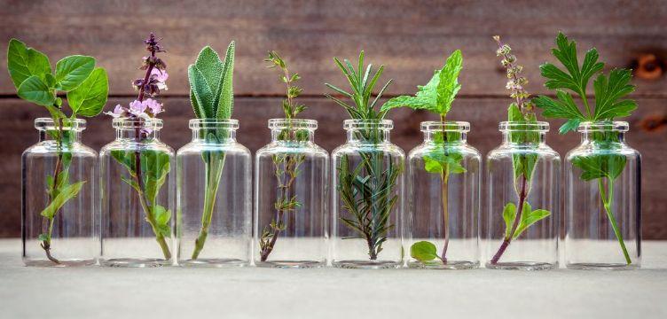 plantas de sombra con flores ideas con reciclaje