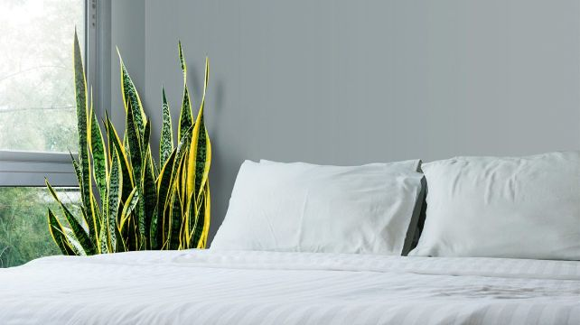 plantas para decorar recamaras en piso