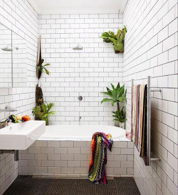 plantas para baños oscuros sobre muros
