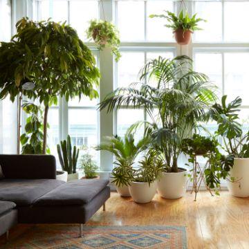 plantas para interiores salas altas