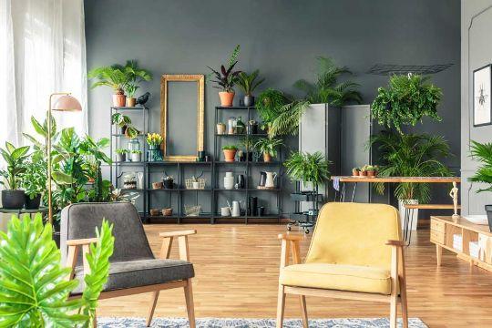plantas para interiores salas amplia diversidad