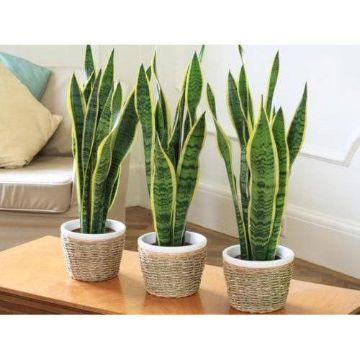 plantas para interiores salas clasicas