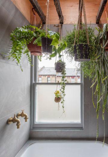 plantas para interiores salas para colgar