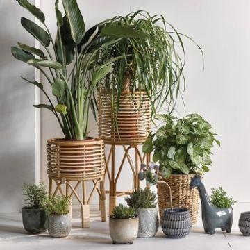plantas de sombra para sala en diferentes macetas y tamaños