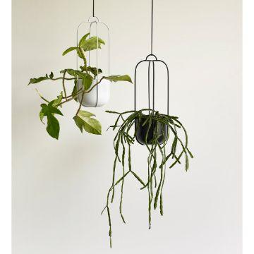 plantas de interior colgantes con maceteros originales