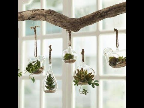 plantas de interior colgantes suculentas