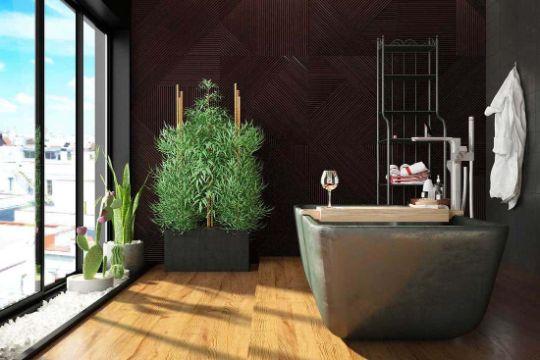 plantas para baños oscuros especies