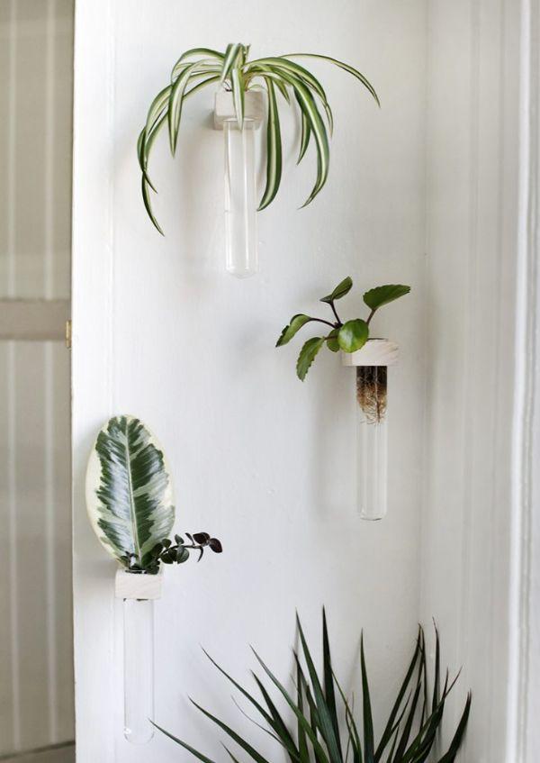 como poner plantas en la pared con tubos propagación