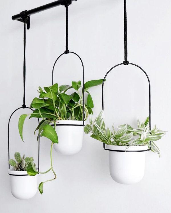como poner plantas en la pared de manera minimalista