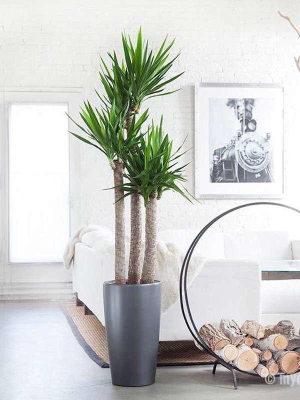 plantas de interior grandes macetas