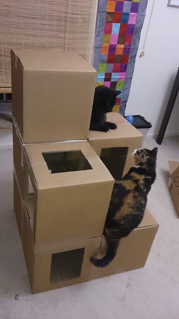 casas para gatos de carton faciles de construir