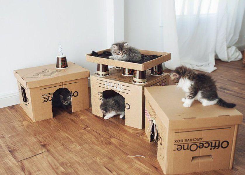 casas para gatos de carton para cachorros