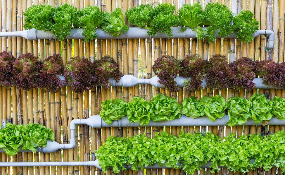 jardines en patios pequeños ideas para sembrar
