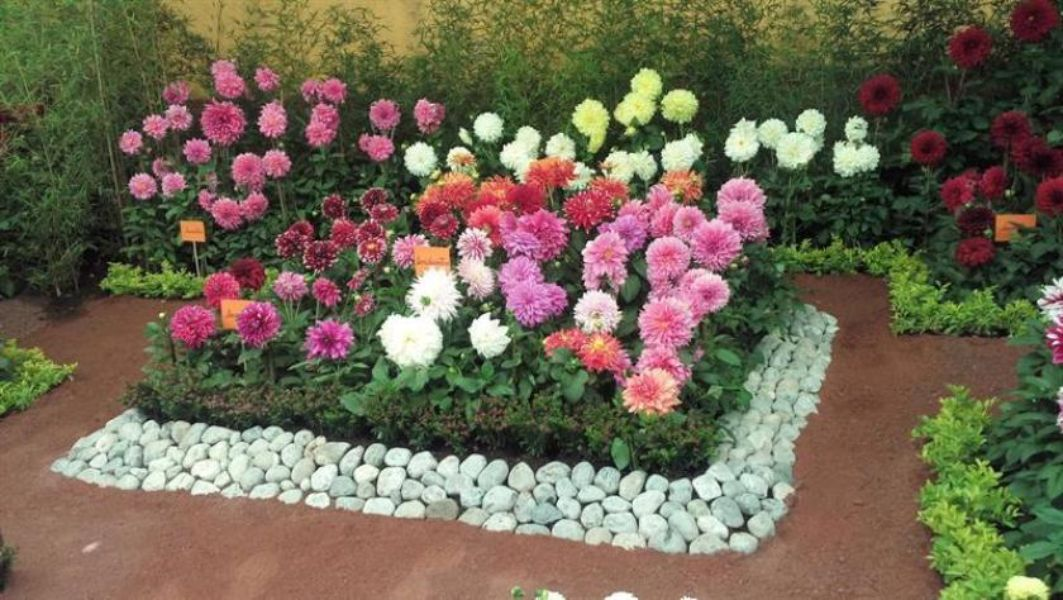 jardines pequeños con flores dalias