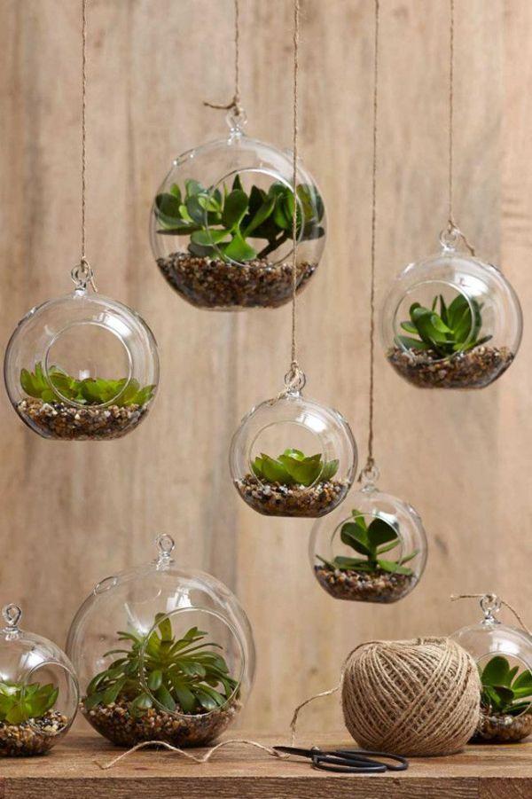 decoracion con plantas de interior modernidad con suculentas